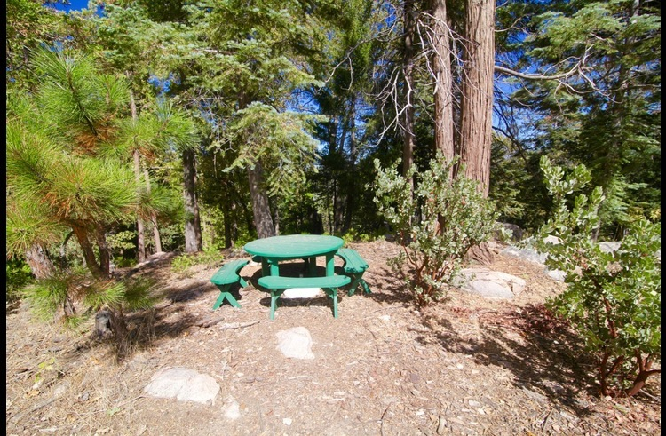 Picnic tables surrounded by trees and vacant land