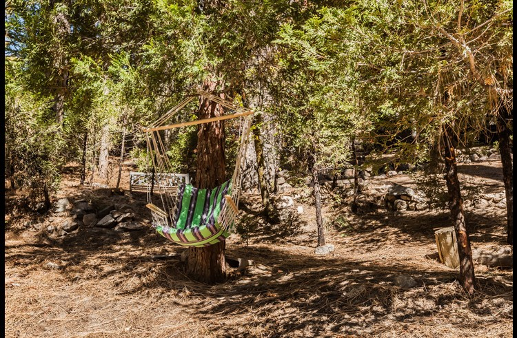 Swinging chair hanging from a tree