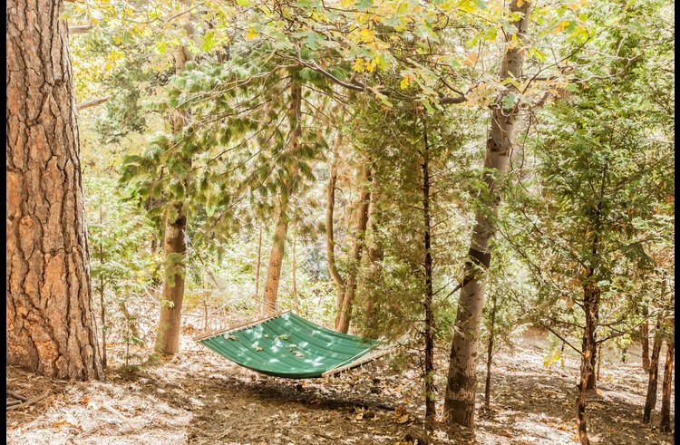 Hammock in the woods